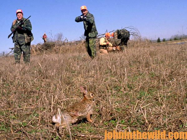 Hunting Rabbits With Dogs Videos