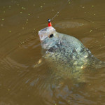 Use a Depth Finder and Cast to Catch Crappie in February's Cold Weather