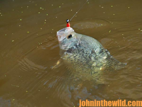 Use a depth finder and cast to catch crappie in february s for Best crappie fishing times