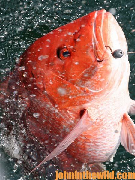 How to Catch a Big Red Snapper with Captain Randy Boggs 2