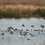 How to Hunt and Take Ducks in Deep Water