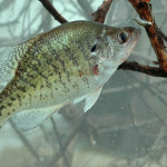 Read the Weather to Catch more February Crappie