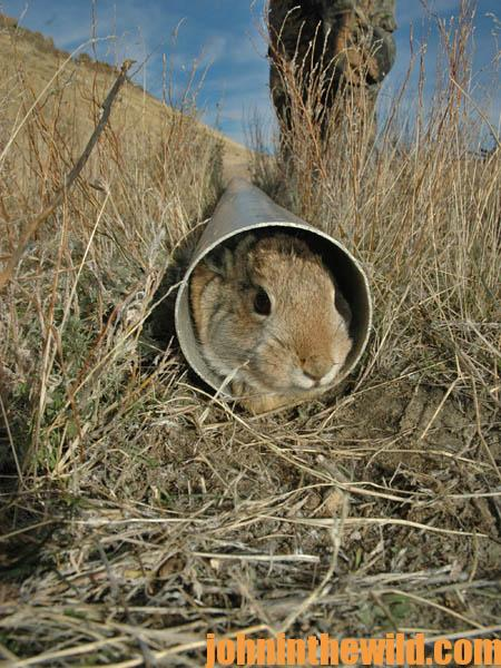 Search for Bunnies Under Power Lines and Tactics for Hunting Rabbits During a Drought14