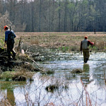 Tips for Hunting Rabbits in High Spots, Protected Areas during Floods, Grass, Cane Thickets and Palmetto Swamps