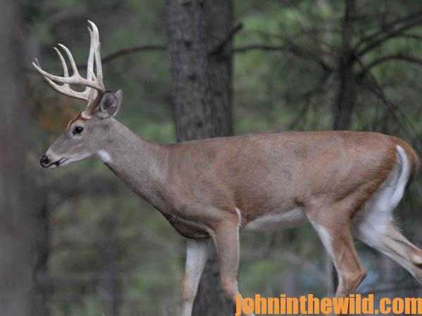 What David Hale Learns from His Trail Cameras that Helps Him Hunt Deer10