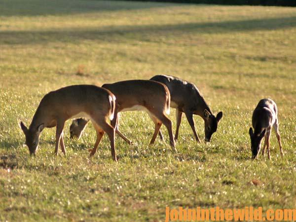 Why Hunt Doe Concentration Zones to Bag a Late Season Buck11