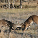 Why Hunt Doe Concentration Zones to Bag a Late Season Buck