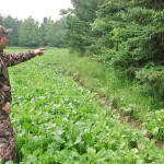 Why Hunt the Feeding Areas for Deer