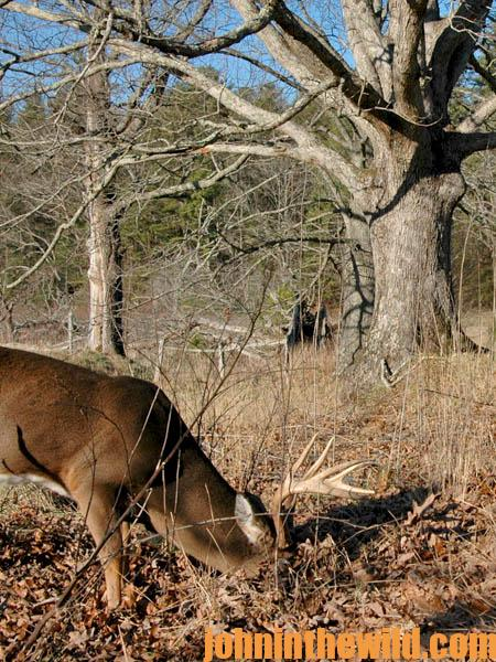 Why Hunt the Feeding Areas for Deer11