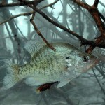 Brian Carter on Fishing Summertime Brush Piles and John E. Phillips on Night Fishing for Crappie