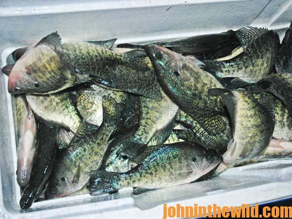 How to Catch Summer Crappie with Ronnie Capps 4