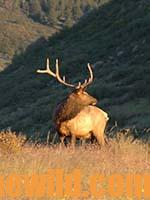 J. R. Avid Hunter Keller Shares Five Tips for Taking Bigger Bull Elk13