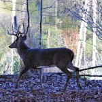 Know Your Deer to Take More