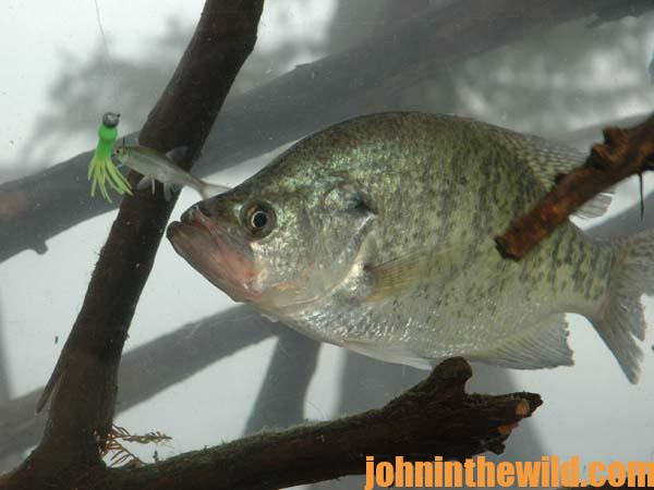 Know the speed of your crappie jig learn to read a depth for Best crappie fishing times