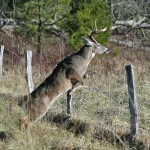 Learn about Deer Before the Season with Dr. Robert Sheppard