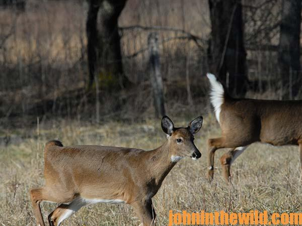 Scouting Hunters Will Help You Have More Success During Deer Season15