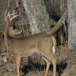 Trying New Tactics Before Deer Season Starts – An Important Key to Deer Hunting Success