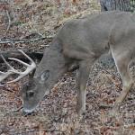 Bowhunt for Deer Successfully in the Early Season by Diagramming Green Fields