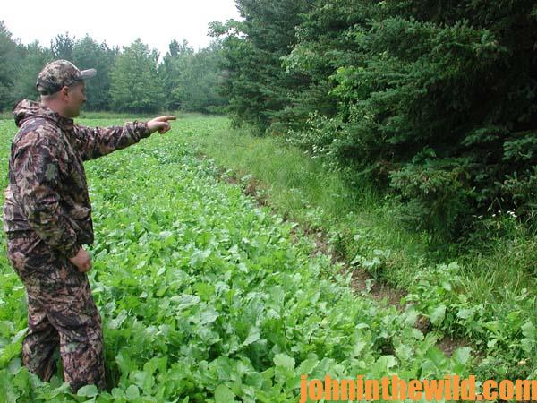 Bowhunt for Deer Successfully in the Early Season by Diagramming Green Fields 4