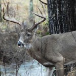 Deer Hunting Apps to Improve Your Bowhunting