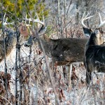 Identify Places to Hunt after Patterning Deer
