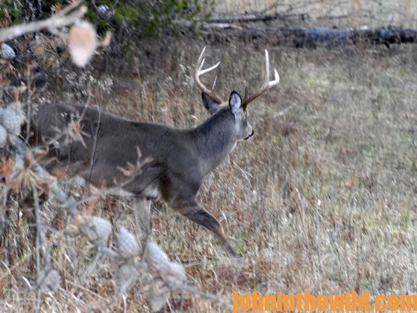 Pinpoint Your Best Hunting Area for Taking Deer 2