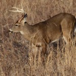 The Importance of Checking All Aspects of Bowhunting Equipment to Take Deer