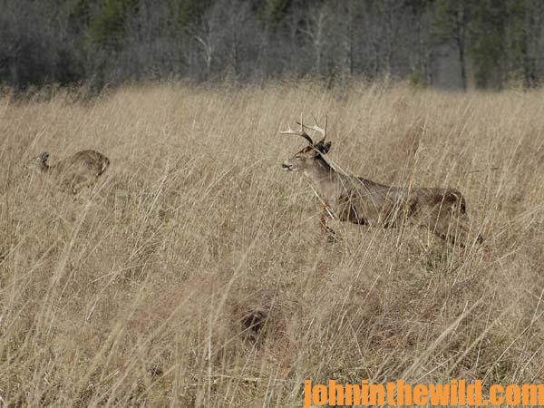 Use a Hunting Tactic That Works to Bag Deer 3