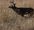 Bowhunting Deer - Choose the Stand by the Wind and Avoid Mistakes 4