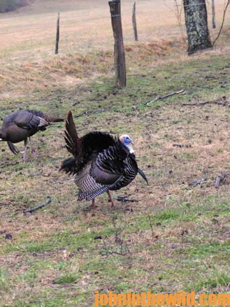 More Equipment Needed for Successful Turkey Hunting11