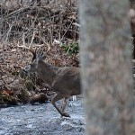 Take More Deer with Ronnie Groom's Five Trail Tactic