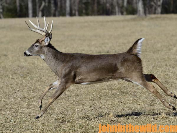 09 Dr. Jim Nelson Tells Us How and Where to Aim at a Running Buck