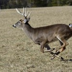 Dr. Jim Nelson Tells Us How and Where to Aim at a Running Buck