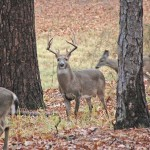 How to Identify a Place to Take Buck Deer in December