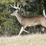 How to Hunt Deer Uphill and Downhill