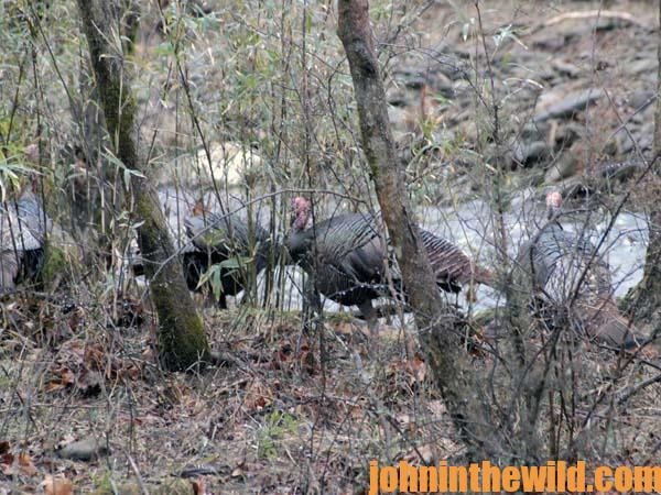 02 How Seeing Better Can Improve Your Hunting for Turkeys and Deer