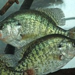 Two Close-By Rivers with Different Spawning Times and How to Fish Windy Days