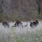 Doubling on Turkeys Is Fun – Here are Some Tactics That Work