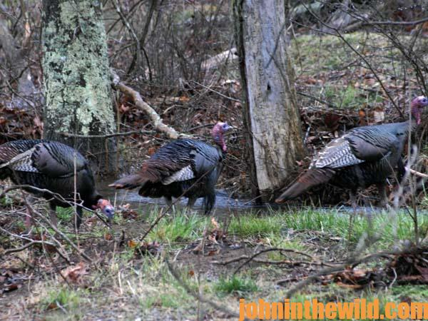 14 How Your Eyes May Cause You to Miss Turkeys or Deer