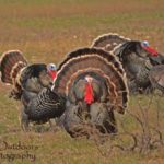 Guide and Hunt Rio Grande Gobblers with J.J. Kent