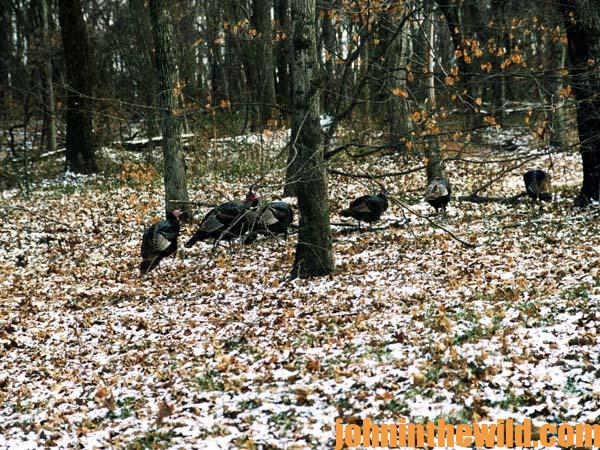12 How Cold Weather and No Cover Means Tough Early Season Northern Turkey Hunting