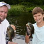 New Tricks for Bluegills