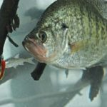 You Can Enjoy Crappie, Catfish, Speckled Trout, Shrimp and Crab