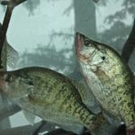 Catching Hidden Summertime Crappie