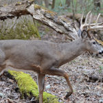 Why Hunt State-Managed Wildlife Areas for Deer