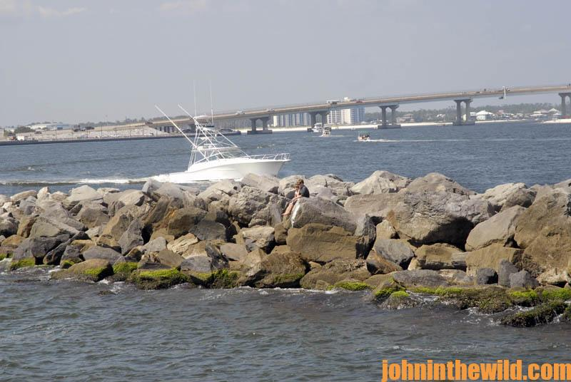 Why fall fishing is best on alabama s gulf coast in the for Gulf shores inshore fishing