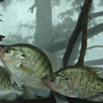 Use Bait Snake Fishin Lights to Catch More Crappie after Dark