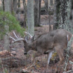 Scouting with Your Ears and Eyes When Hunting Deer