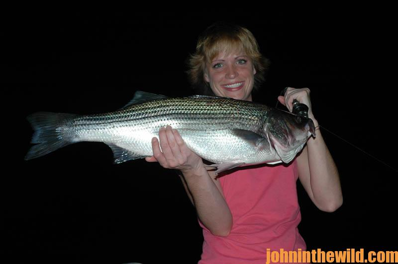 Understand how to use the bait snake lights to catch for Striper fishing at night