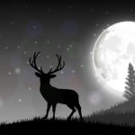 Moon Phase Does or Doesn't Affect Deer Hunting
